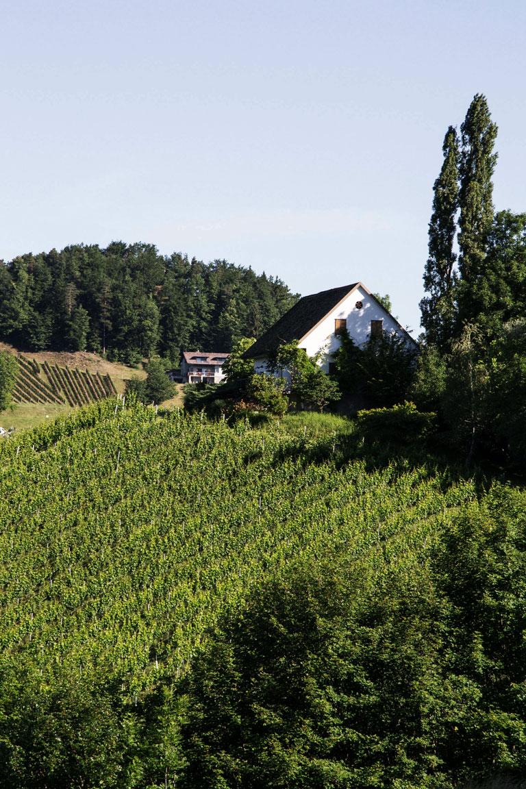 Regele-Weingaerten-Oberglanzberg-neu
