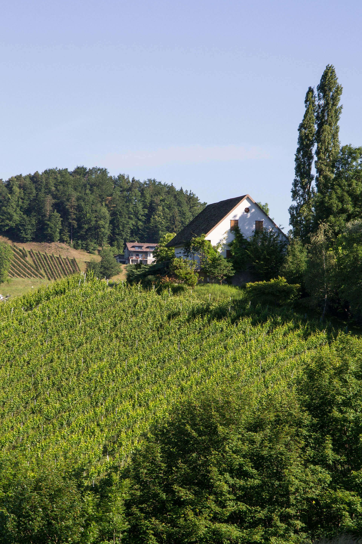 Regele-Weingaerten-Oberglanzberg